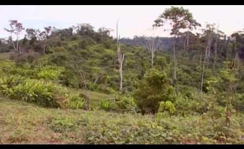 L'ayahuasca, Le Serpent Et Moi