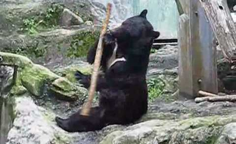 L'ours jongleur ! (vidéo originale)