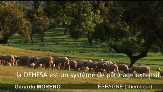 Agroforesterie, produire autrement