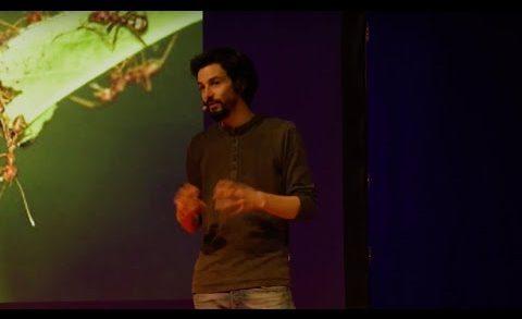 La 2ème loi de la jungle : l'entraide | Pablo Servigne